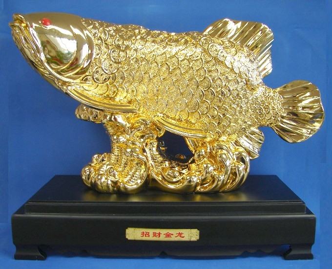 Huge Golden Arowana Fish Bringing Wealth