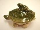 Money Frog on Turtle