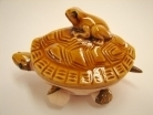 Money Toad on Turtle