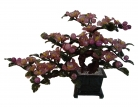 Purple Jade Peony Flowers Tree